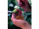 Trandafiri Pomisori si Plangatori. Crearea de soiuri noi de trandafiri la Meilland International