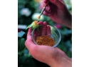 Trandafiri Urcatori. Crearea de soiuri noi de trandafiri la Meilland International