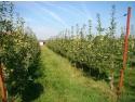 pepiniera certificata. www.ValahiaGarden.ro a lansat singura hartă a productivităţii pomilor fructiferi în toate localităţile din România