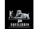 iubitori de cai. Equilibrio - Animaland - hrana pisici