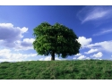 ANDERSSEN -consultanta SA 8000 - Consultanta ISO 27001 - certificare SA 8000 - certificare ISO 27001