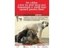 Campanie de sterilizari gratuite pentru caini - Bucuresti  Citeste mai mult: Comunicate de Presa