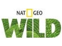 sacalul in Romania. Nat Geo Wild in Romania