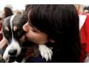 """caini comunitari. Zeci de căţei adoptaţi la târgul """"Sunt salvat! M-au adoptat!""""- ediţia a doua"""