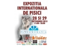 Plaza Romania. Expozitia Internationala Felina Starkatz