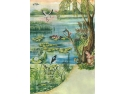 Malul lacului - Habitat - specii