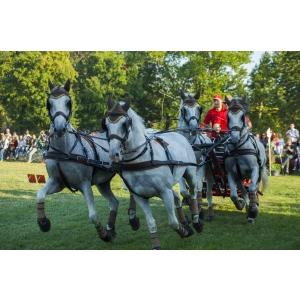 Karpatia Horse Show 2016: opt mii de spectatori s-au bucurat de ineditul unui show ecvestru de anvergură internațională