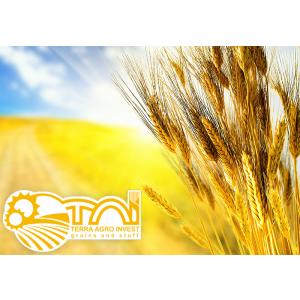 Terra Agro Invest alege ERP si BI de la Senior Software