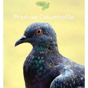 Produsecolumbofile.ro - produse pentru performanta porumbeilor campioni