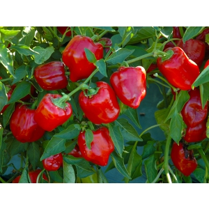Rolul pesticidelor in agricultura si solutii de la NuOricum