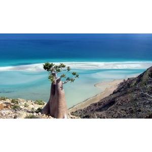 Accesibil din ianurie 2015 si romanilor: Socotra, cel mai straniu loc de pe Pamant!