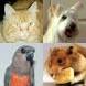 caine. Ai un caine, o pisica, un papagal, un animal de casa? Acum pot deveni vedete!