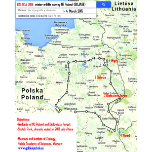 canis aureus. Baltica 2015, studiu international de fauna salbatica in zone umede din Polesia de Vest