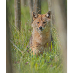 Guvernul României a aprobat o cotă de exterminare de 86,6% la specia de hilac, o specie de interes comunitar