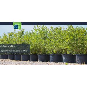 produse cultivare sol. Afini - Natural Invest SRL