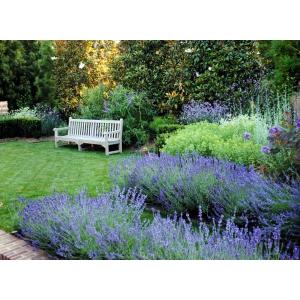 arbusti. MG Garden & More lansează site-ul www.gardenmore.ro