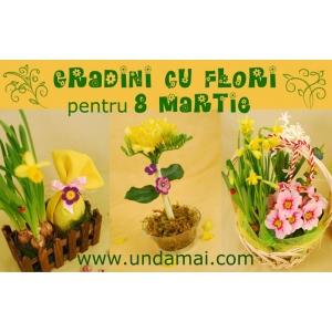 flori 8 martie. Cadouri 8 martie - Gradini cu flori - Unda Mai