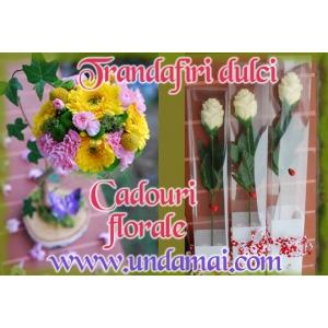 Trandafiri cu Floari Mari. Trandafiri din ciocolata si cadouri florale pentru un 8 MARTIE minunat