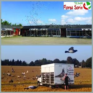 Team Florea Sorin la Danish Pigeon Race