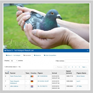 Triplu impact - Porumbeii Team Florea Sorin obțin 3 victorii formidabile în 3 dintre cele mai importante competiții columbofile din lume