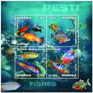 hrană pentru pești. Peștii – o aură de mister și îndemn spre aventură