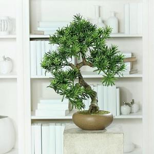 Infrumuseteaza-ti locuinta cu acesti arbusti ornamentali care iti vor aduce liniste si pace!