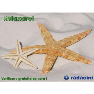 verificare sistem informatic. Verificare gratuita la service Radacini