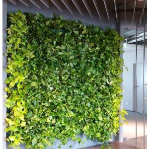 Gradini verticale - un trend pentru cladirile verzi din Bucuresti. Fii VerdeLaBirou, cu gradina verticala.