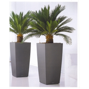 plante ornamentale. plante-decorative-birou