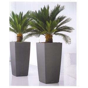 plante decorative. plante-decorative-birou