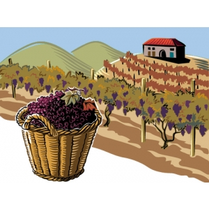 Team building la vie: Povestea vinului