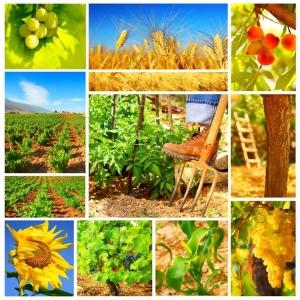 management agricol. Cursuri de management in domeniul agricol