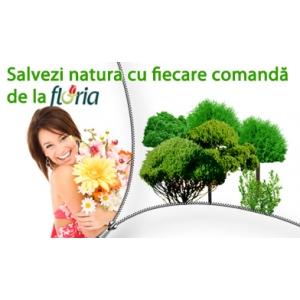 Cumpara un buchet de la Floria si ajuti la plantarea unui copac