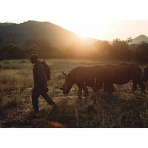 Maria Nila sprijina rinocerii aflati in dificultate
