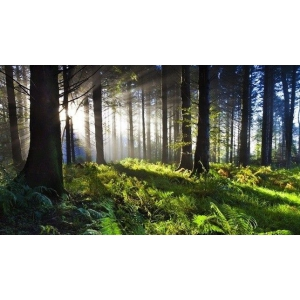 Dinamica tranzactiilor cu terenuri forestiere indica interesul investitorilor pentru padurile din Romania