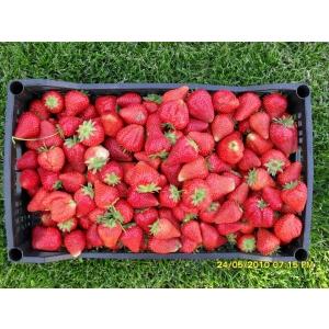indagra. pomifructiferi.com pariticipa la Indagra 2013