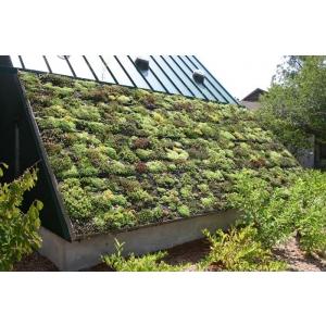 HotNews: Odu Green Roof este prestator de servicii eligibil in cadrul programului Casa Verde Plus