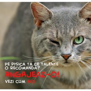 catbox. Peste 250 de pisici isi doresc un post de  director de comunicare la Catbox.ro