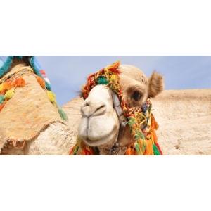 Charter Sharm el Sheikh  | Cocktail Holidays – singurul zbor direct operat de Tarom