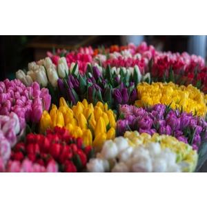 5 motive sa cumperi flori pentru cineva de la o florarie online