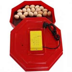 Care este cea mai buna metoda de incubatie – closca sau incubatorul pentru oua?