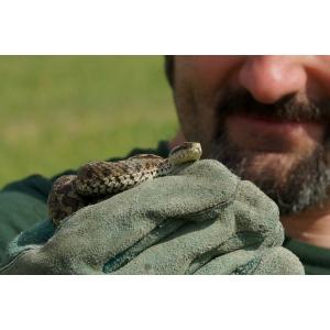Primul seminar naturalistic gratuit dedicat persoanelor cu fobie de serpi va avea loc la București