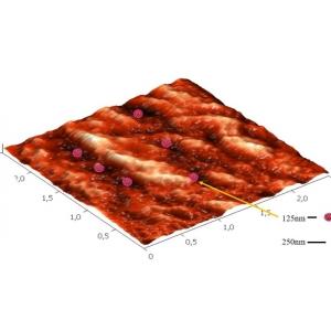 Localizarea virusului între pliurile polimerului din ambalaj (mărire de aprox. 500.000 ori – microscopul de forțe atomice)