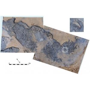 descoperiri. Descoperiri recente – urme de pasi vechi de peste 800 000 de ani