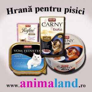 Mancare uscata pisici. Hrana pentru pisici