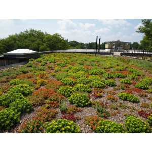 Acoperis verde extensiv – O alternativa ecologica recomandata de profesionistii ODU