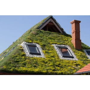 Acoperis verde extensiv  - Solutii profesionale de la Odu Green Roof
