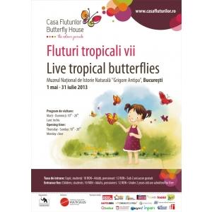 """fluturi tropicali vii. Expoziţia temporară """"Fluturi tropicali vii"""""""