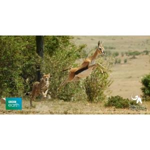 """the hunt. Muzeul Național de Istorie Naturală """"Grigore Antipa"""" si BBC Earth vă invită la proiecția gratuită a documentarului The Hunt"""
