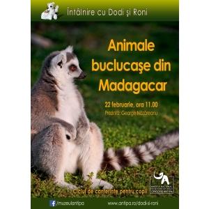 madagascar. Intalnire cu Dodi si Roni: animale buclucase din Madagascar